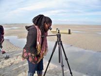 L'observation des phoques