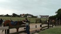 A la découverte des chevaux...